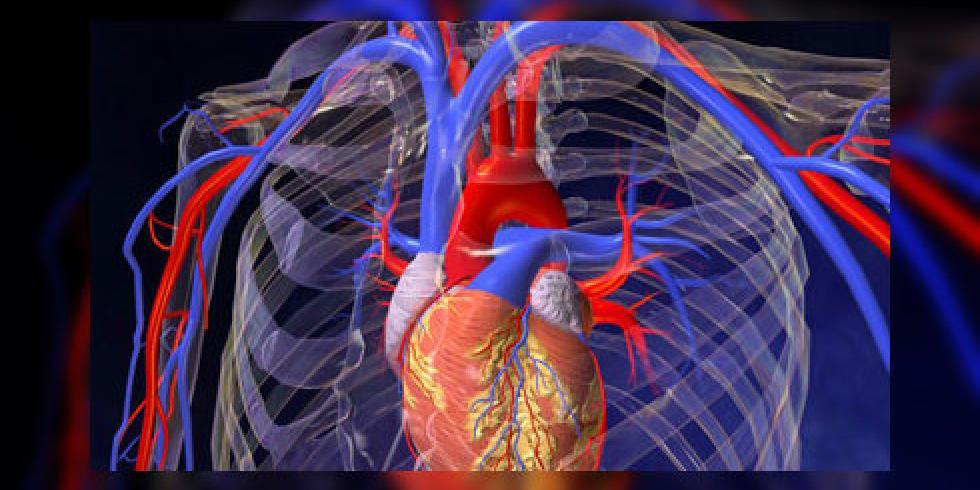 vernauwing bloedvaten in de hersenen